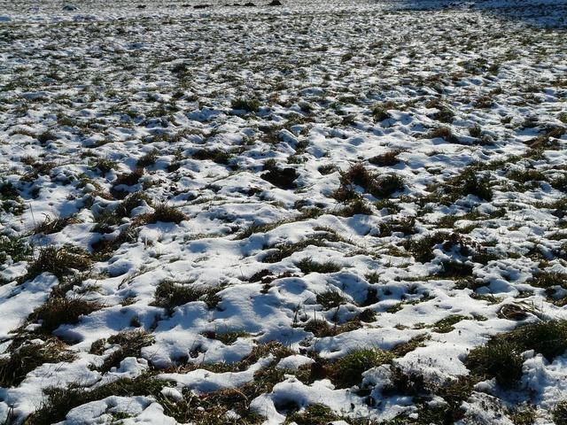 Meadow field snowy.