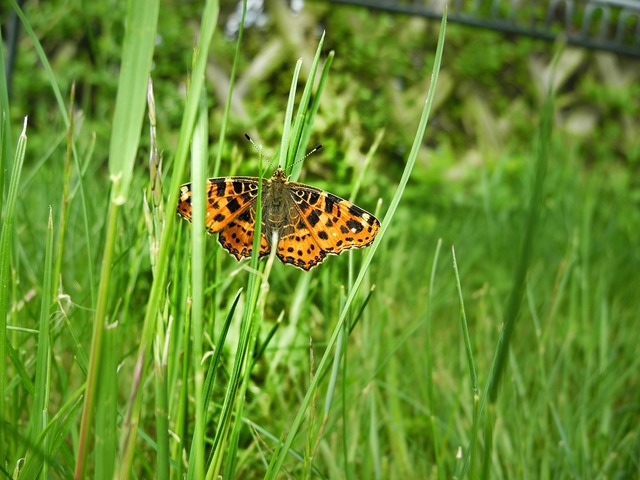 Meadow green butterfly, nature landscapes.