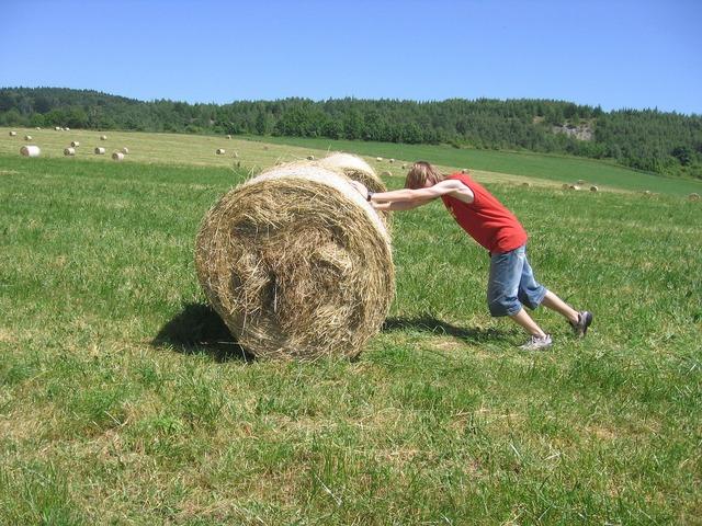 Meadow hay boy, people.