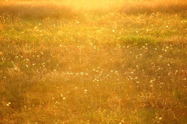 Meadow sun spider webs.