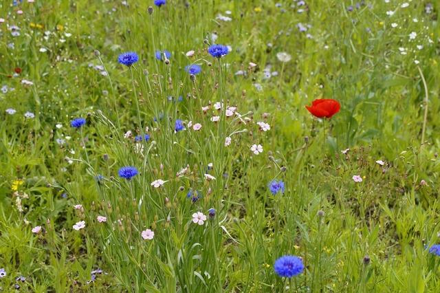Meadow wild flowers bloom.
