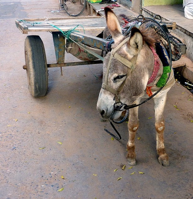 Means of transport india cart.