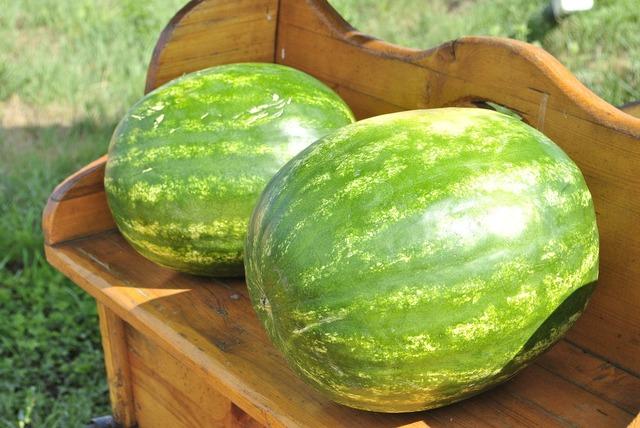 Melon watermelon fruit, food drink.