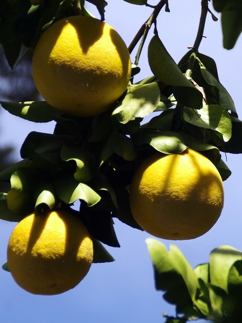Mexico grapefruit yellow, food drink.