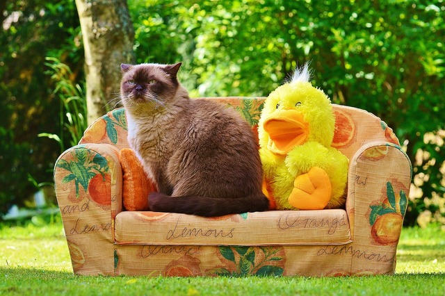Mieze couch sofa, animals.
