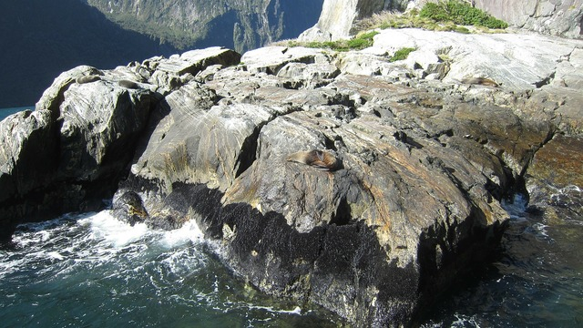 Milford sound seal rocks.