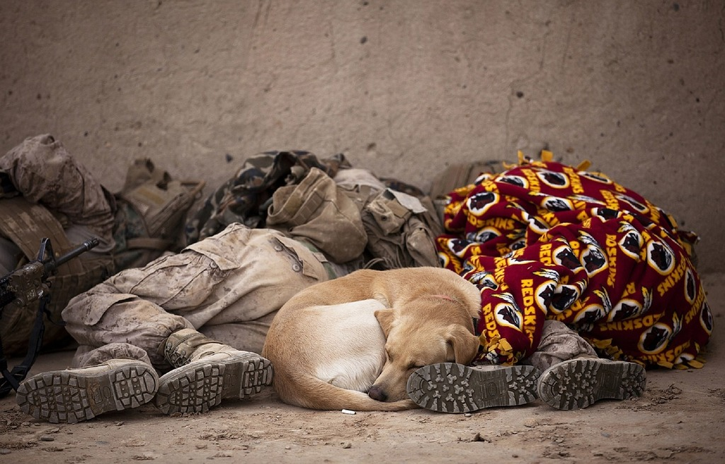 Military soldiers sleeping, animals.