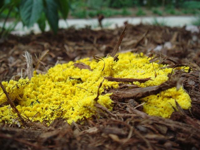 Mold nature slime, nature landscapes.