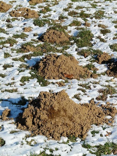 Molehill mole earth.