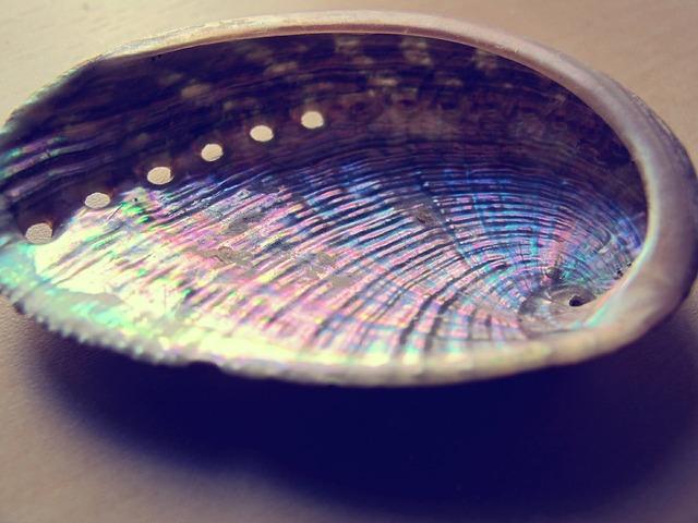Molluscum sea shell, travel vacation.