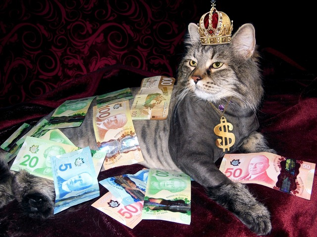 Money cat wealth, business finance.