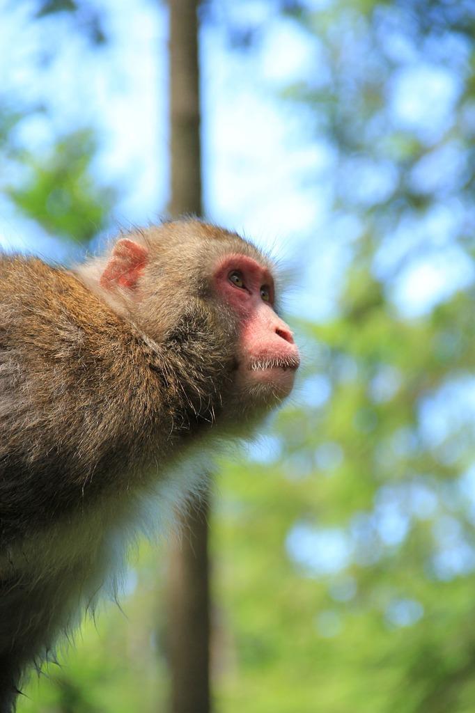 Monkey äffchen nature, nature landscapes.