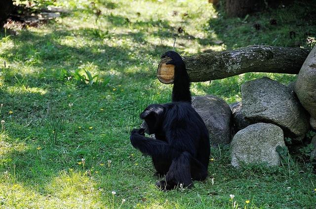 Monkey äffchen wild, animals.