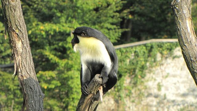 Monkey äffchen zoo, animals.