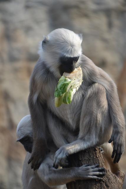 Monkey animal zoo, animals.