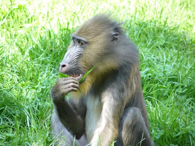 Monkey baboon primate.