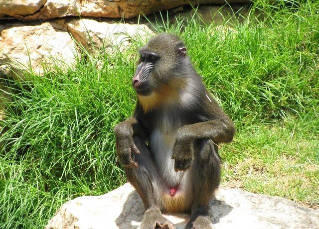 Monkey baboon sitting, nature landscapes.