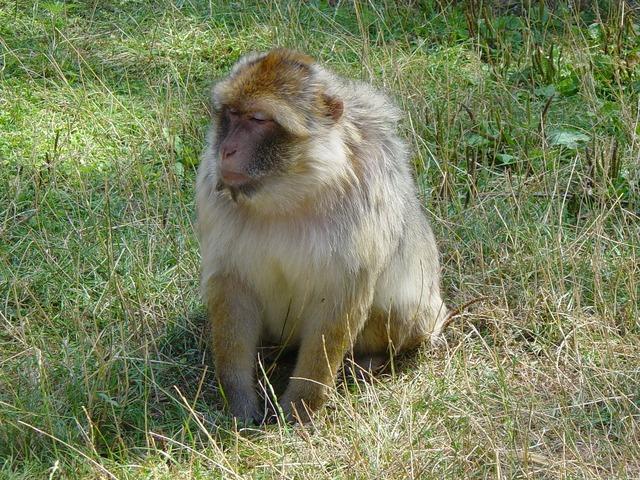 Monkey baboon zoo.