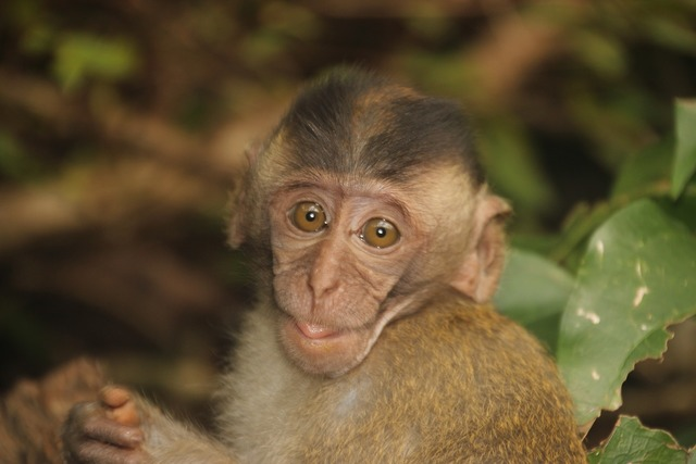 Monkey baby monkey child.