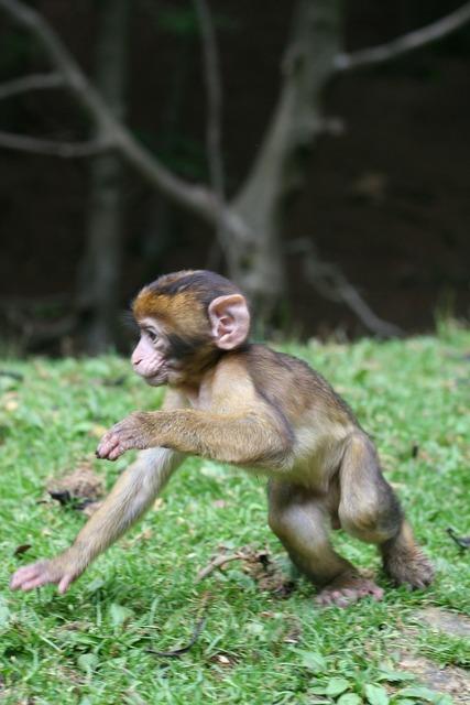 Monkey baby nature, nature landscapes.