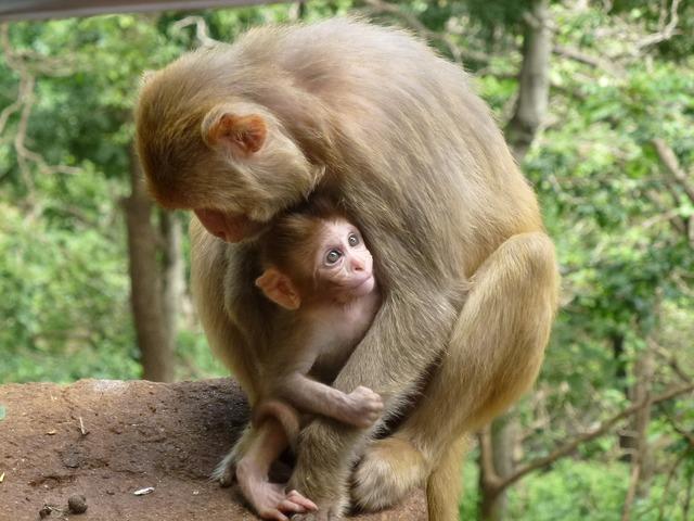 Monkey family animal monkeys, animals.