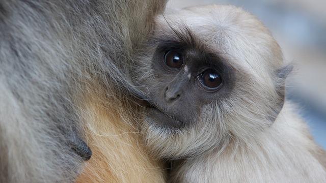 Monkey frames baby.