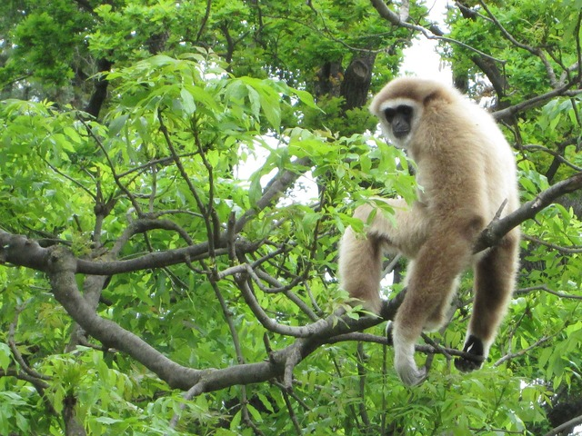 Monkey jungle zoo, animals.