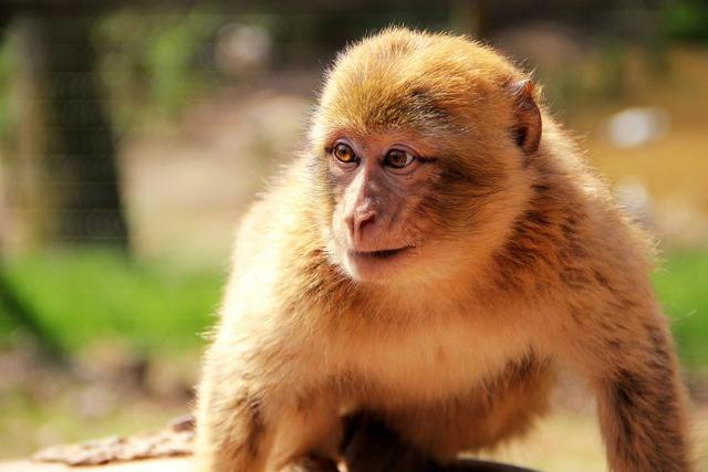 Monkey nature animal, nature landscapes.