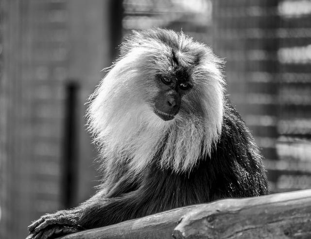 Monkey safari zoo, animals.
