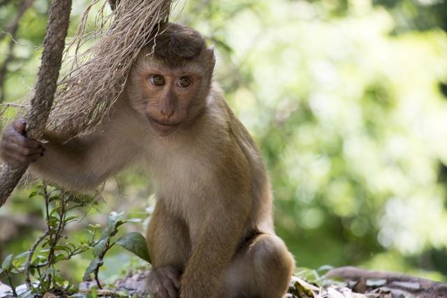 Monkey thailand asia, nature landscapes.