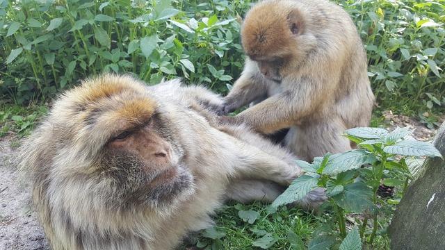 Monkey view zoo, animals.