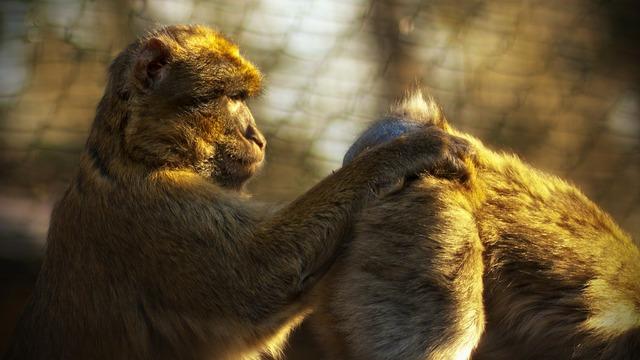 Monkey zoo ape, animals.