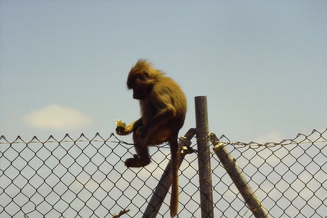 Monkey zoo nature, nature landscapes.