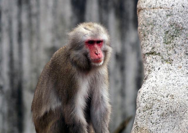 Monkey zoo silly.