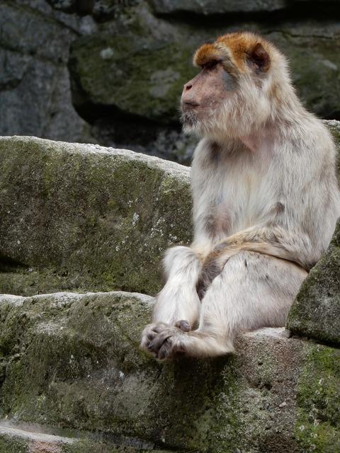 Monkey zoo watch, animals.