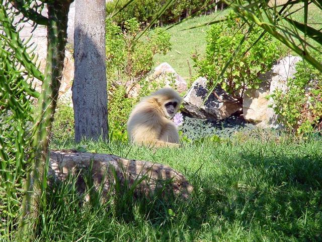 Monkeys monkey family animal, animals.