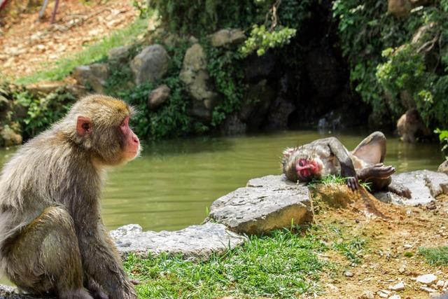Mono ape japan.