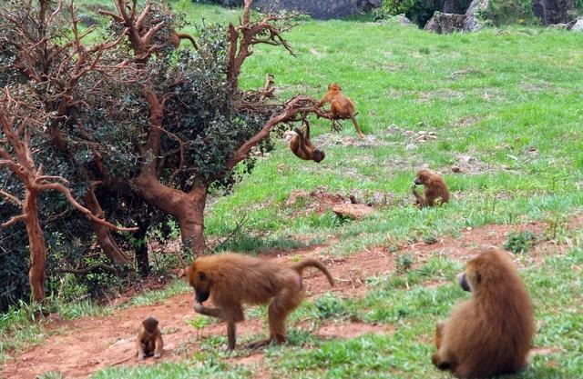 Mono ape macaco, nature landscapes.
