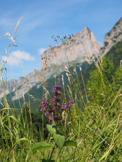 Mont aiguille mountain massif, nature landscapes.