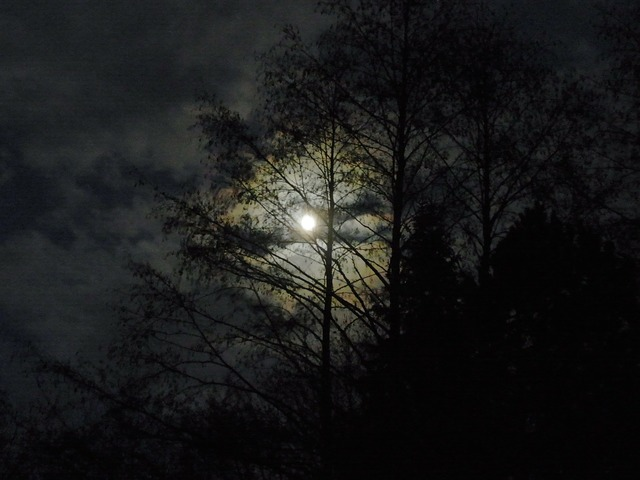 Moon at night moonlight, nature landscapes.