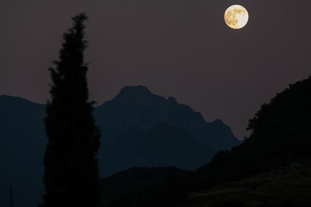 Moon cypress mountains.