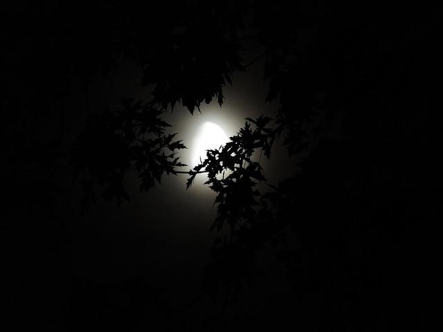Moonlight through trees moonlight halloween.