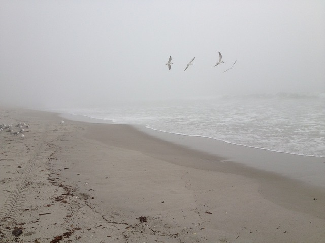 Morning beach fog, travel vacation.