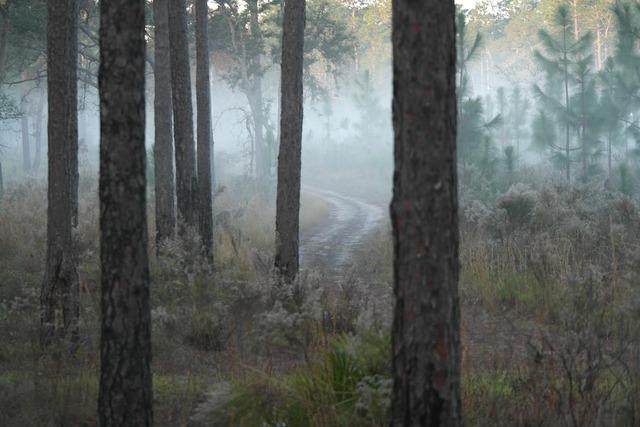 Morning fog forest, nature landscapes.