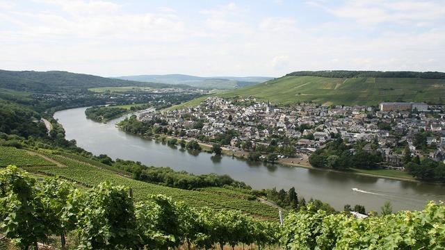 Mosel wine vineyard.