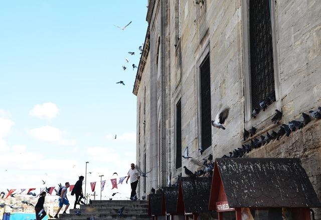Mosque islam pigeons, religion.