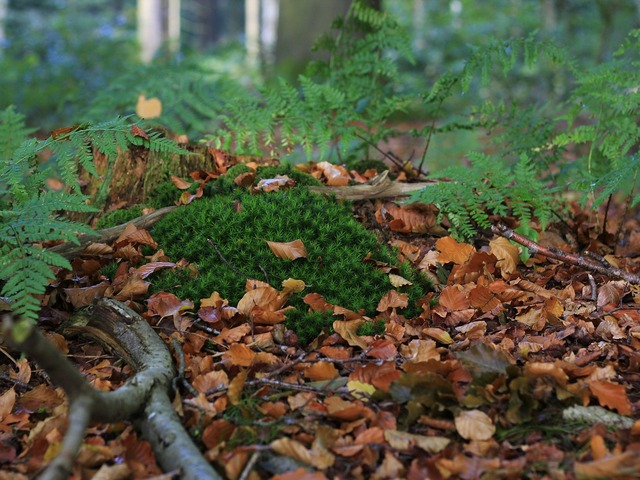 Moss forest floor nature, nature landscapes.
