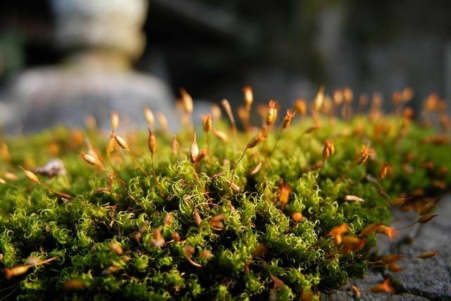 Moss fresh japan, nature landscapes.