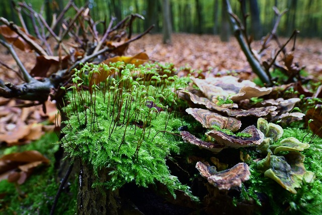 Moss fruit tree fungus forest, nature landscapes.