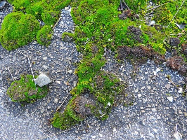 Moss lands green, nature landscapes.